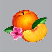 Phoenix170x170bb